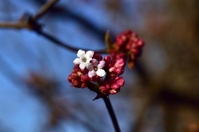 February at the Arboretum