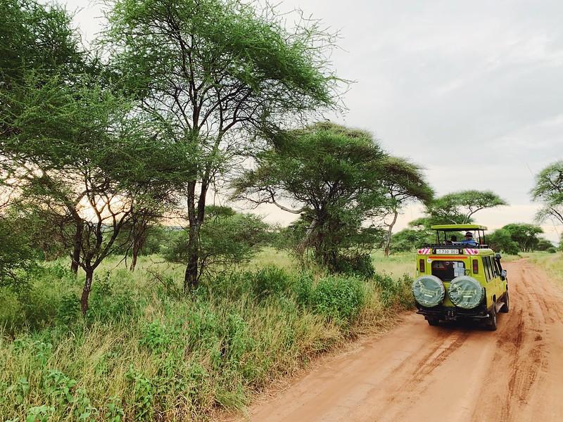 Tansania safari Tarangire