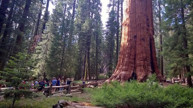 General Sherman Tree, Sequoia National Park  7/24/2015