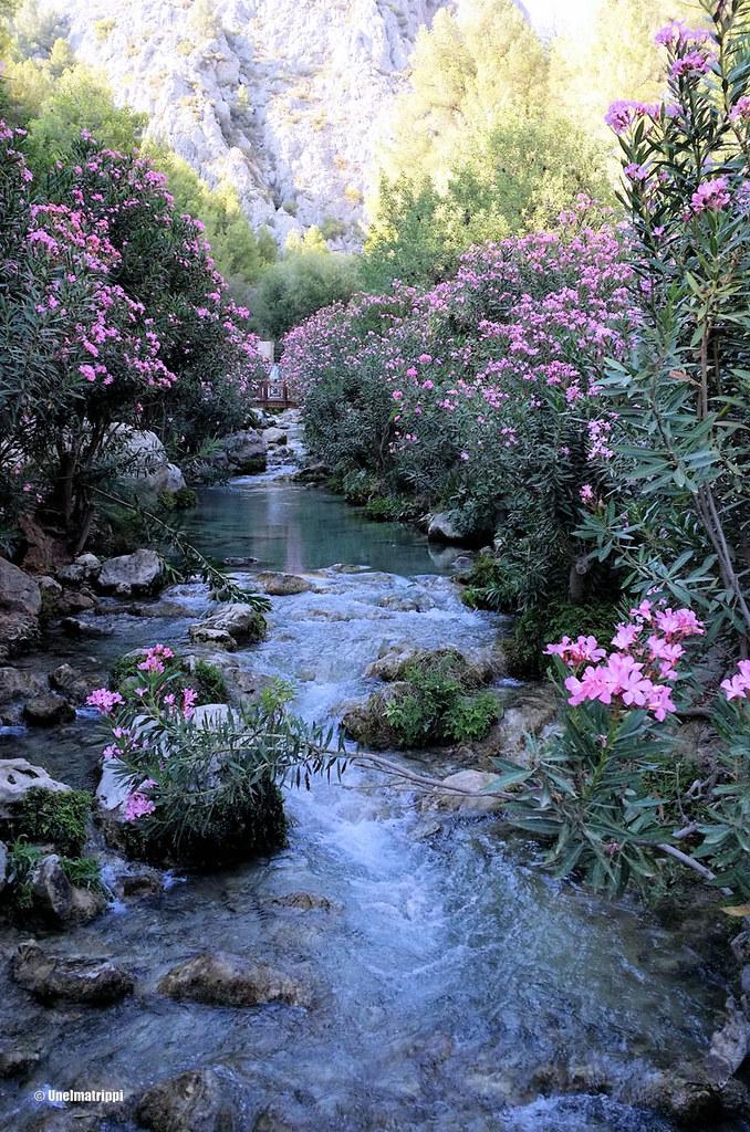 Vaaleanpunaisia kukkia Las Fuentes del Algarin putouksilla Espanjassa