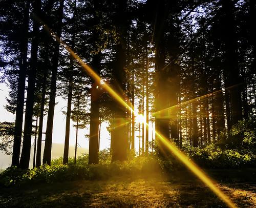 baldpeakstatepark oregon sunset trees summer sun light nature outdoors hiking 2019 iphone