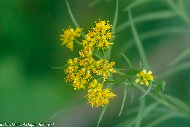 Yellow Wildflower #1 - 2018-0-03