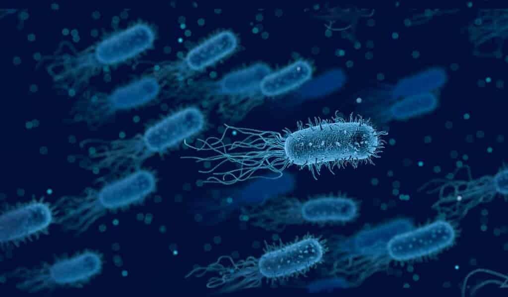 Les futurs antibiotiques pourraient contenir des métaux