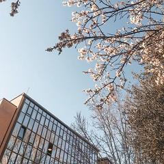 #Buongiorno Sapienza con una foto del Palazzo dei servizi generali di @clarissa.conti ・・・ #Repost: «:cherry_blossom: #floweringtrees and #reflections In quasi tre anni di università ho fotografato questa vetrata da diverse prospettive, questa mi mancava c