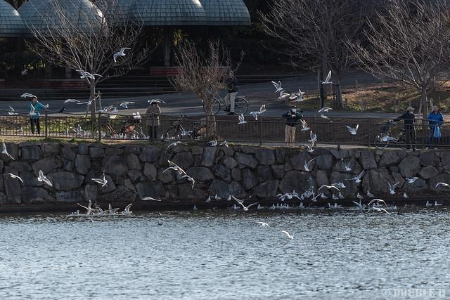 snapshot at Tsurumi Ryokuchi Park 2020.1.9 (7)