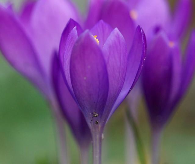 Purple Spring...