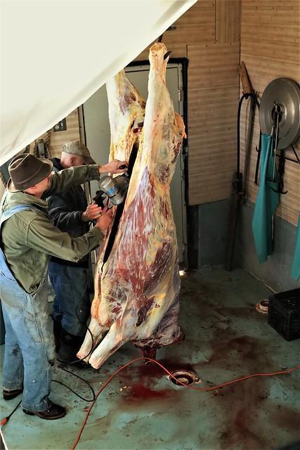 Bull Slaughter: 28
