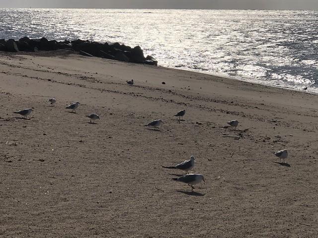 Seagulls down at the seashore