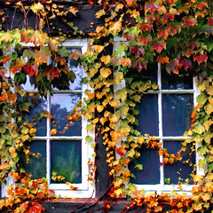 Ivy Framed Window