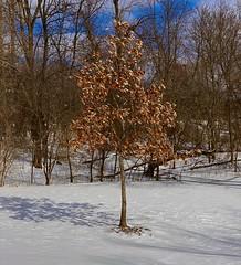 11 Pro - Tree