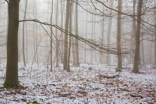 some flecks of colour in the fog