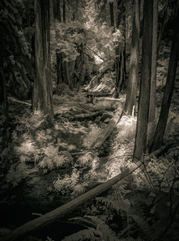 Forest Glade - Toned IR