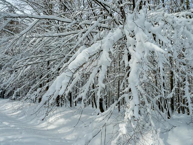 Gedrapeerd in sneeuw