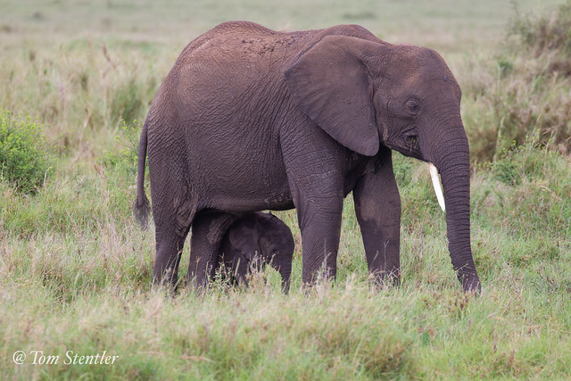 The Elephant with the baby