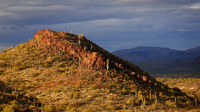 Saguaro on Red Hill SR602250