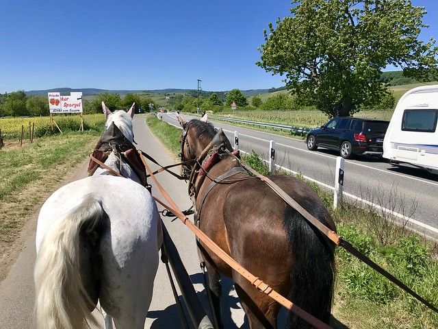 Round Trip with Horses in Walluf on the River Rhine, Germany