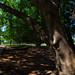 New Farm Park - Brisbane