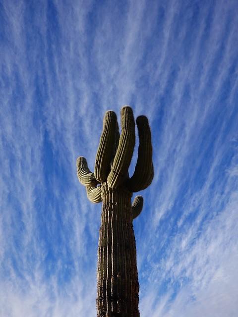 Saguaro in the Clouds SR602219