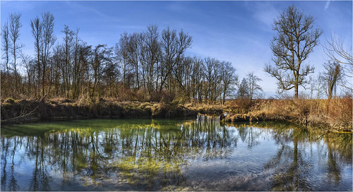 germany bavaria donauauwald creek friedbergerach landscape forest trees water reflection sonyilce7m3