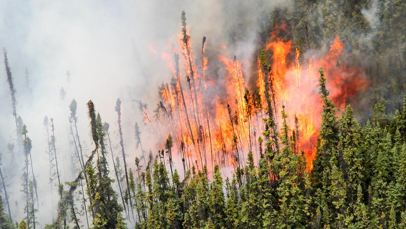 Wildfire season begins March 1