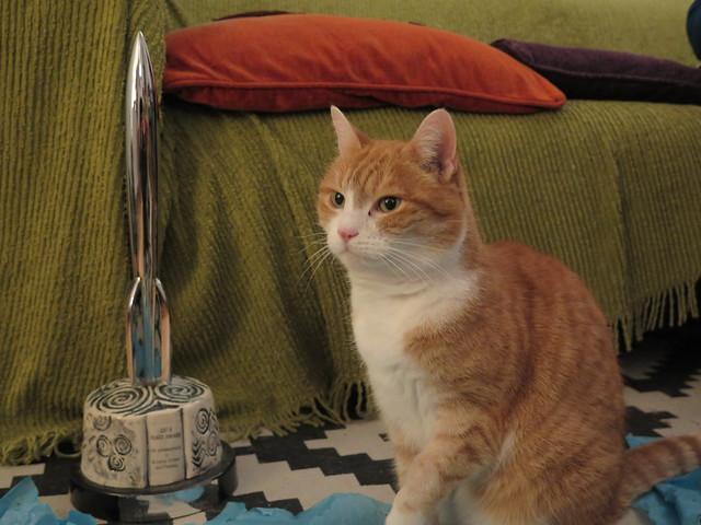 Hugo Award Cat