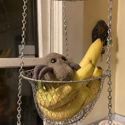Still life with bananas & mite