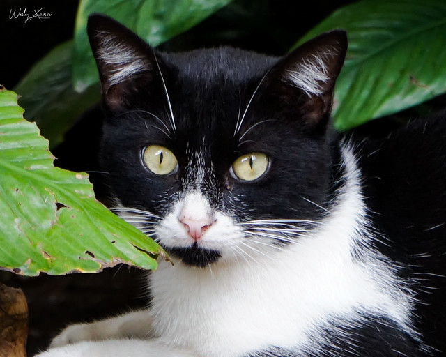 A cat between the leaves