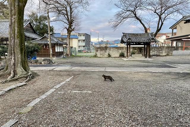 Today's Cat@2020-02-29