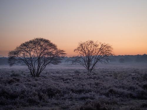 bussumerheide westerheide 2019 heath earlymorning dawn sunrise trees sky