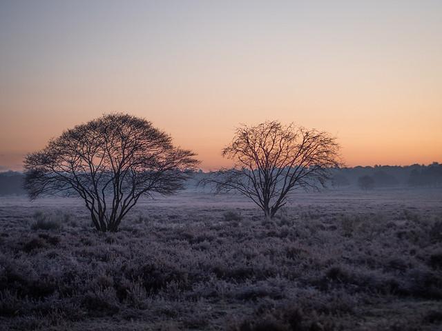 Westerheide 2019: Sunrise