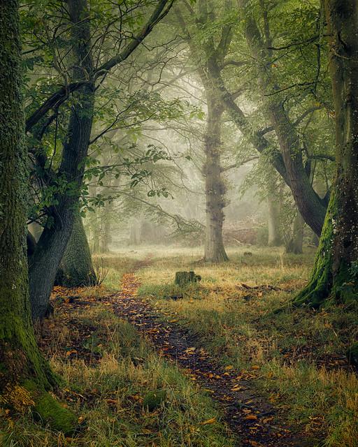 ethereal forest | Oak Walk | Auchterarder | Perthshire