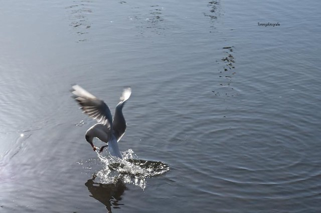 Action of a seagull