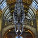 The Great Blue Whale  Natural History Museum London Sony A7 Carl Zeiss Contax G