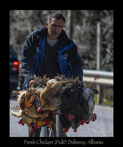 pulë chicken poultry freshmeat albania elbasan balkans canon