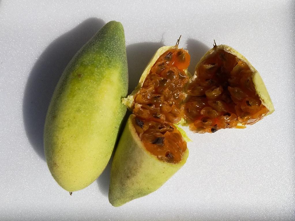 01170 Passiflora tarminiana, TAXO