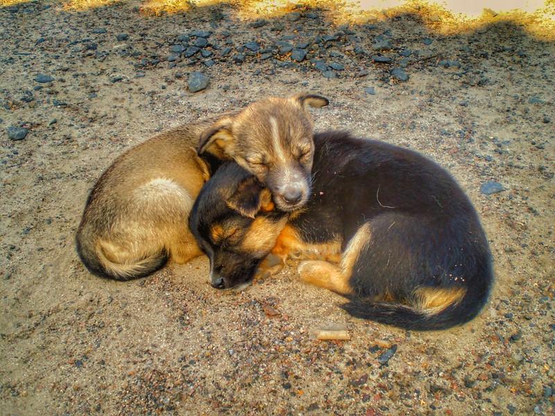 #puppy #щенки #дворняжки #цуценята #собачки