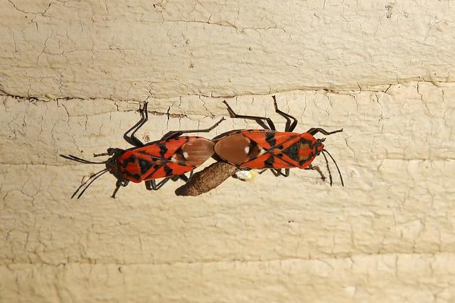 Bugs - Wanzen