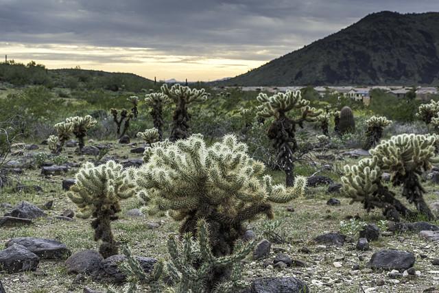 desert life in Deem Hills Recreational Park