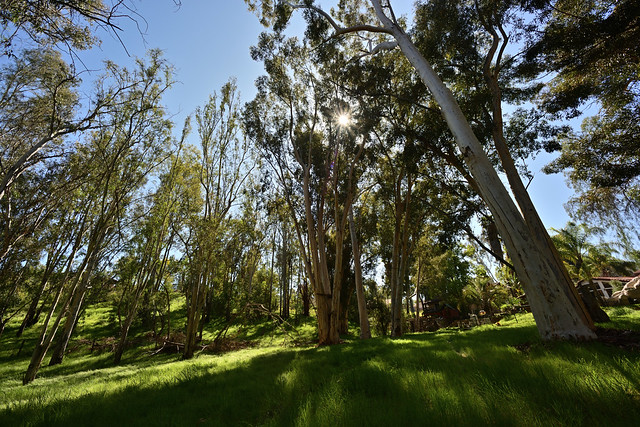 nikon 15mm 3.5 D810 Via Rancho Meadow_1_03