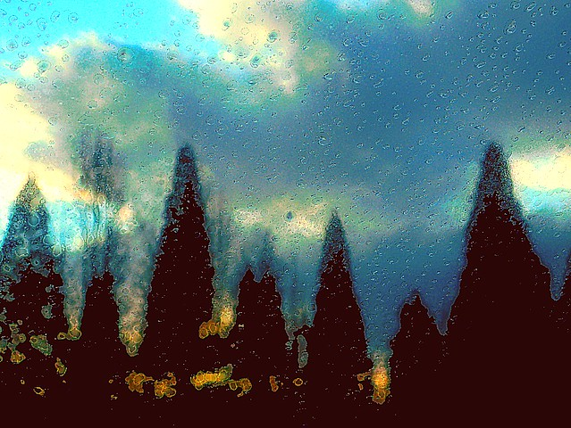 Row of Trees at Sunset During Rainfall ~ a Rainting ~ HSS