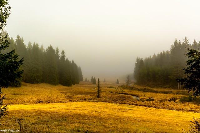 Nebel zieht auf im Schwarzwassertal