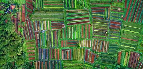 Patchwork of plots, Cisauk, Indonesia