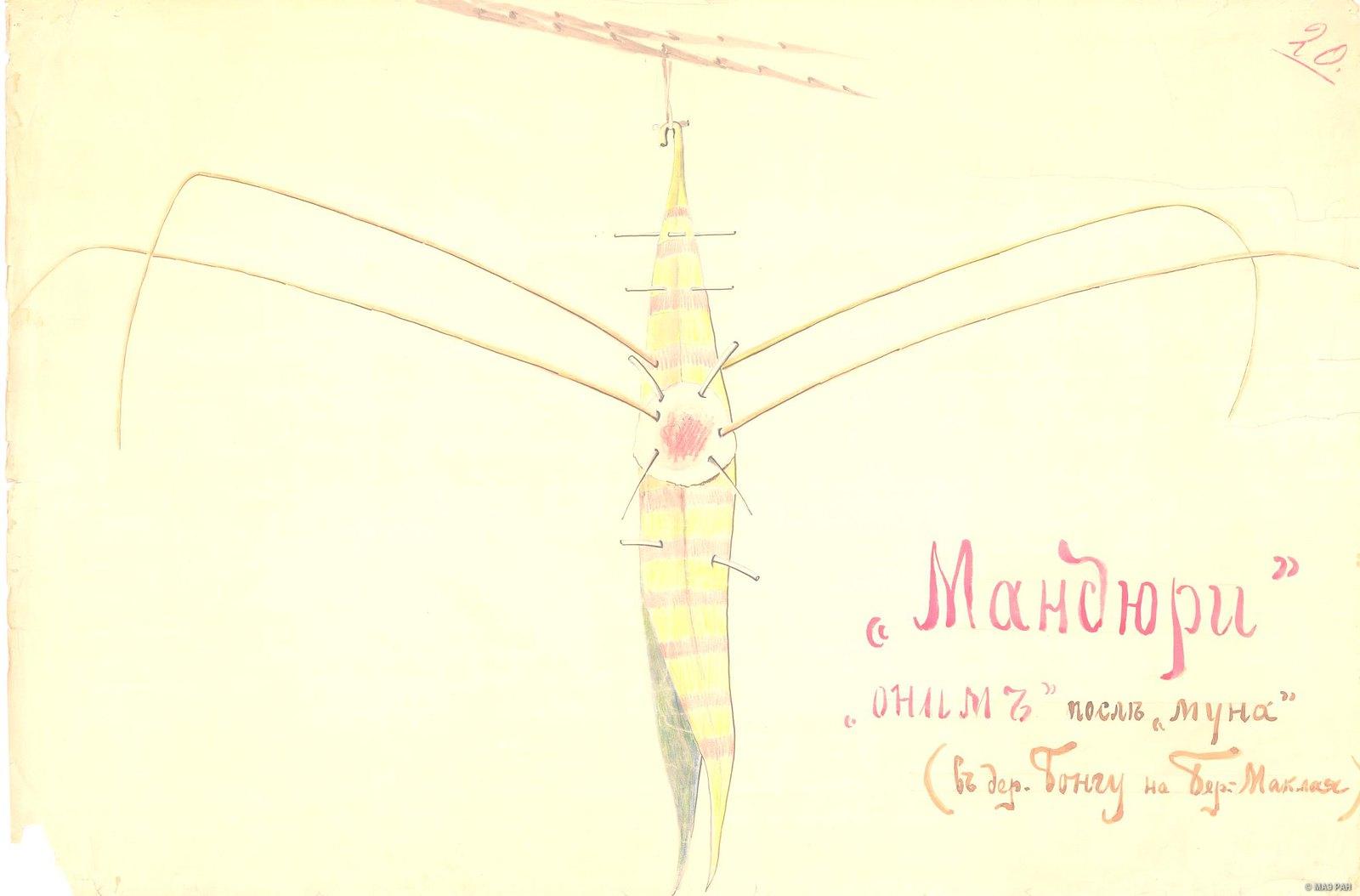 1880-е. Магический предмет (оберег) «мандюри» Папуасы Новой Гвинеи (в дер. Бонгу на Бер. Маклая)