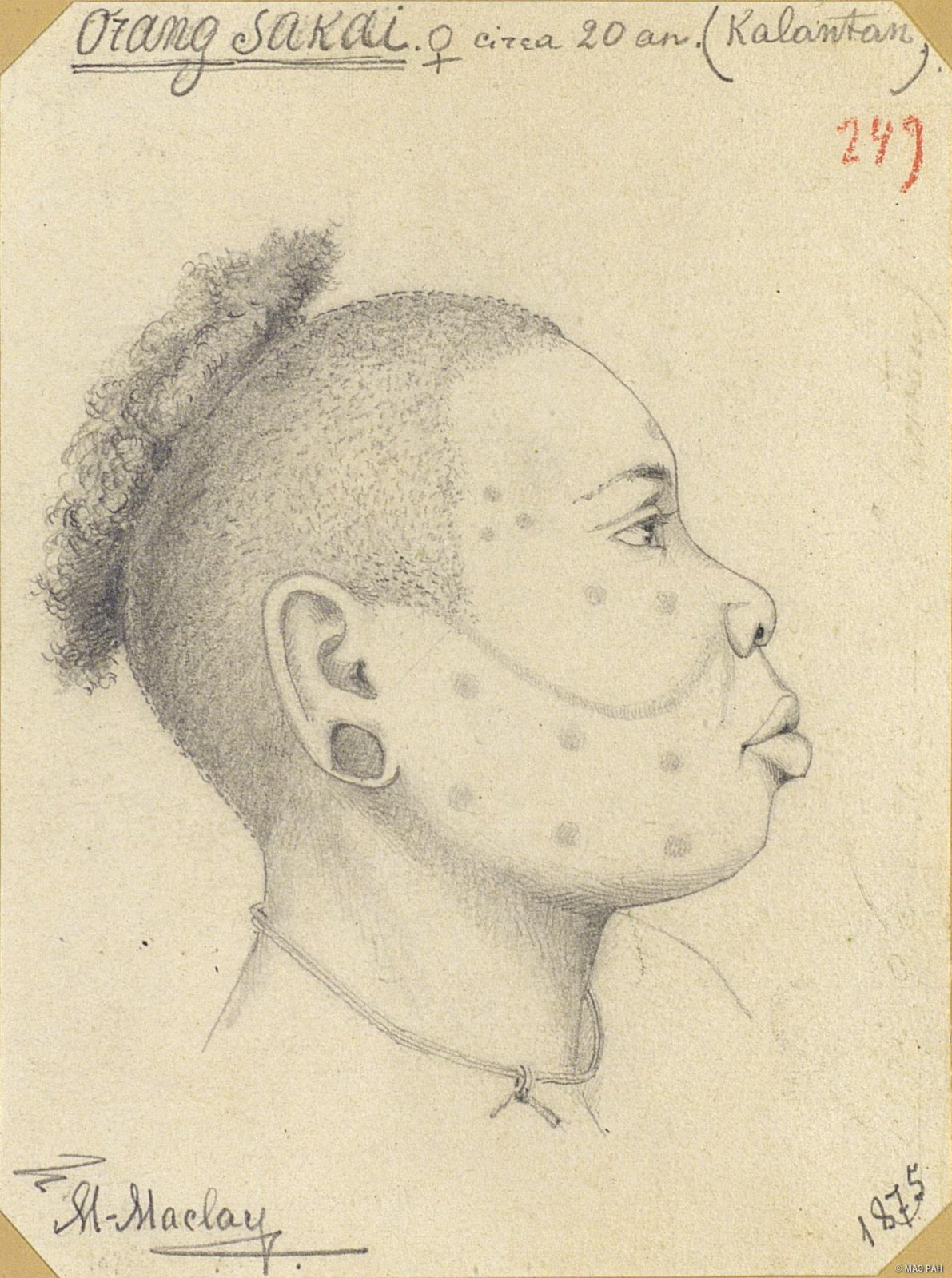 1875. Портрет в профиль женщины оранг-сакай в возрасте около 20 лет. Сакаи.