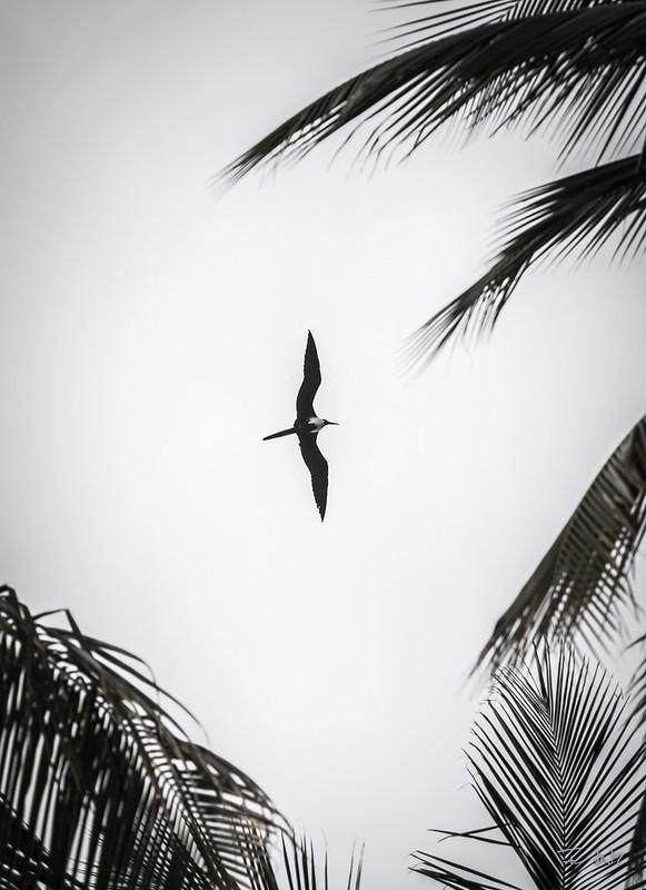 Fan7  - François Leroy | Guadeloupe - Frègate a? Ste Anne
