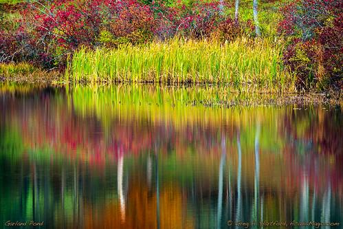 autumn cattails reflections trees reflection pond lake garlandpond garlandmaine maine newengland nature landscape standoftrees green grass october fallseason penobscotcounty