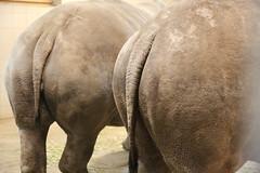 Nashornpopos Zoo Schwerin