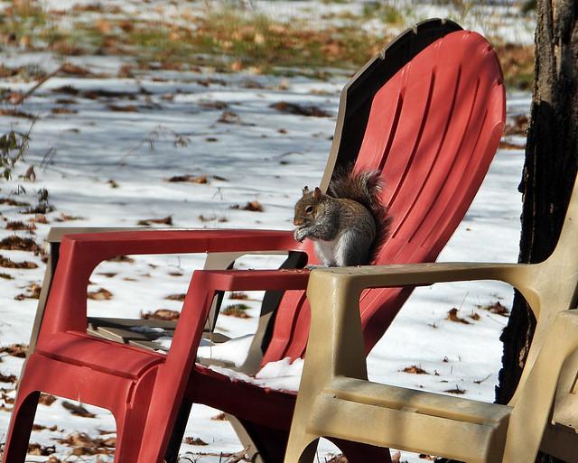 Arm Chair Peanut Eater