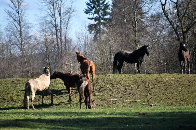 Horses 01.03 (8)