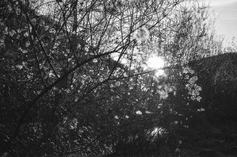 Retraite spirituelle en Ombrie - Lumière dans les arbres